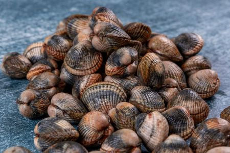 Fresh Live Cockles