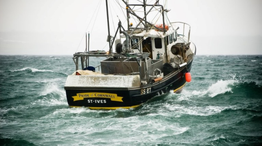 Sustainability - Care for Marine Life in Cornwall