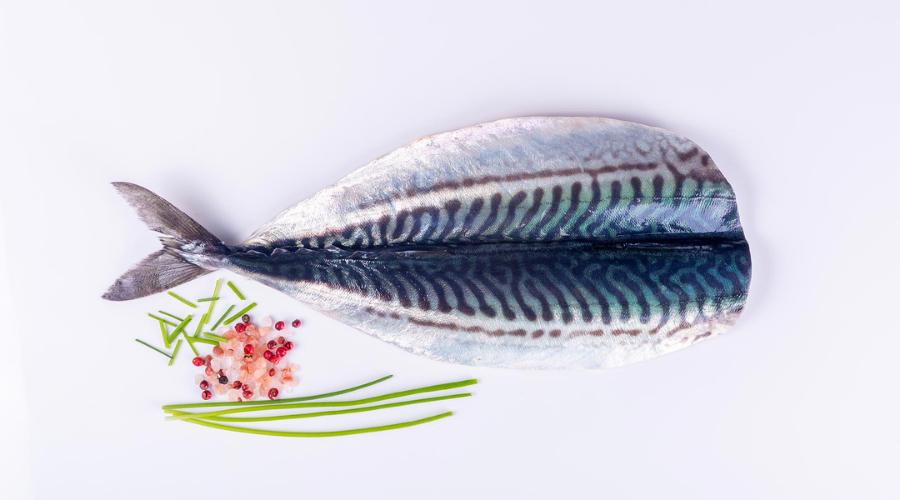 Cornish Handline Caught Mackerel