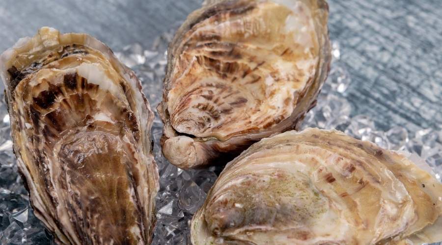 """Cornwall oyster workers fear EU rules could """"kill off"""" trade"""