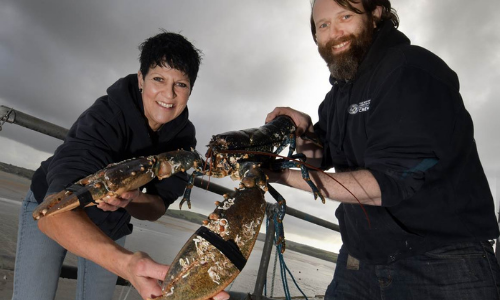 Colossal Crustacean Donated